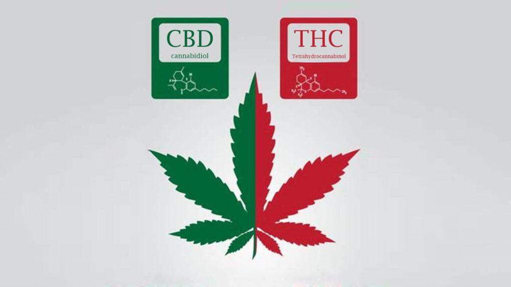 """ CBD vs THC Unterschied, cbd oder thc gegen schmerzen"""