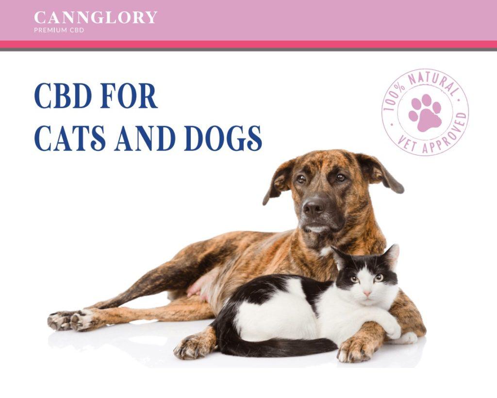 CBD für Hunde, Katzen, Wirkung, Dosierung