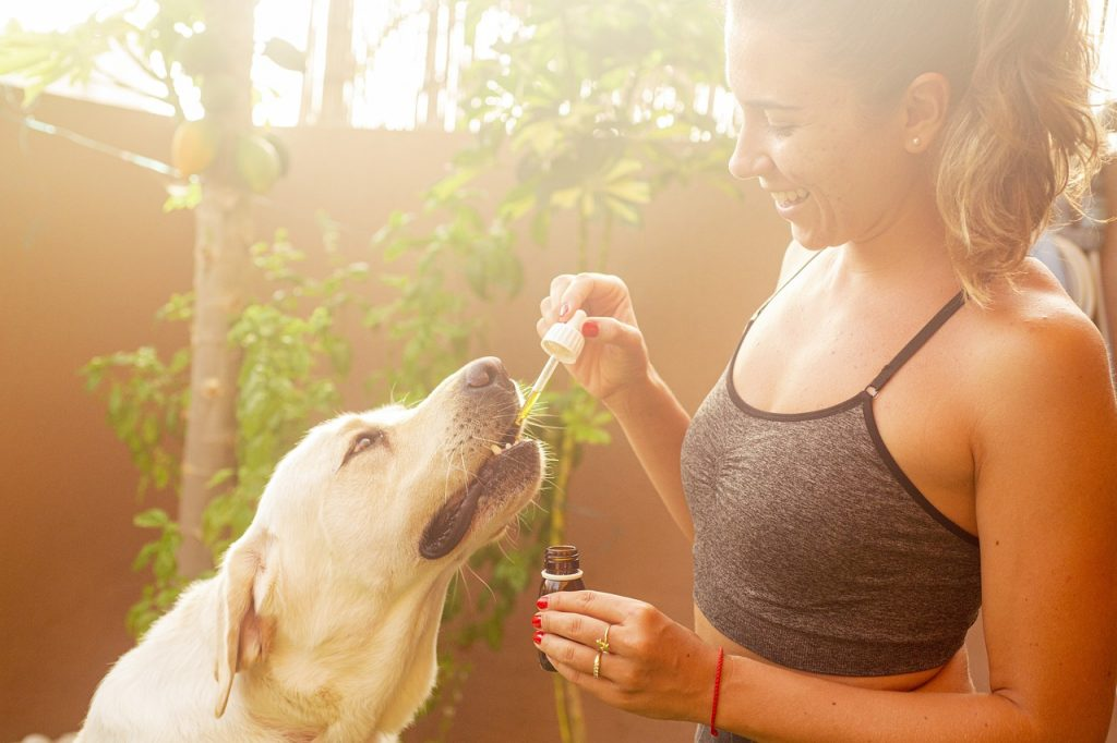 CBD for dogs effect