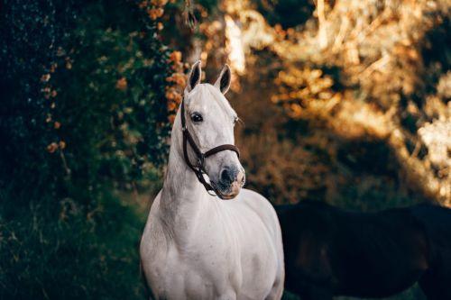 CBD für große Tiere - Pferde, große Hunde, Behandlung von Schmerzen, Krankheiten, Krebs, Verletzungen