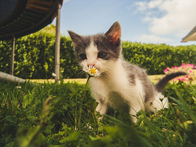 CBD for cats cannglory