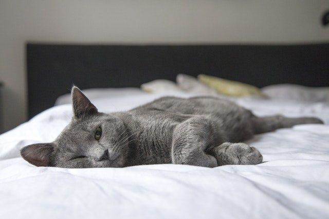 CBD for epilepsy in cats