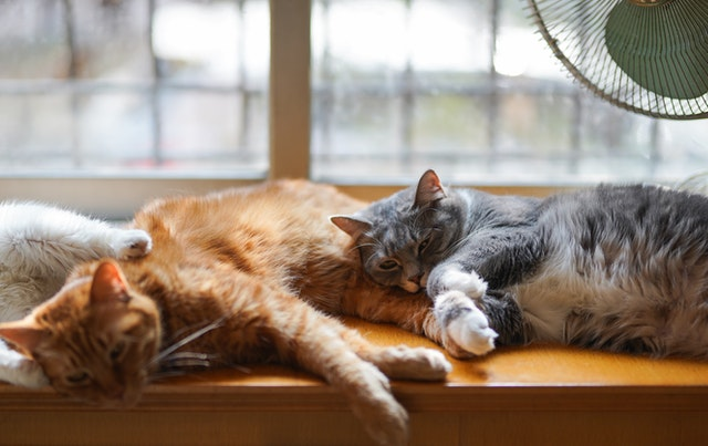 cbd for cats in pain