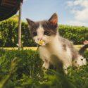 CBD für Katzen Cannglory